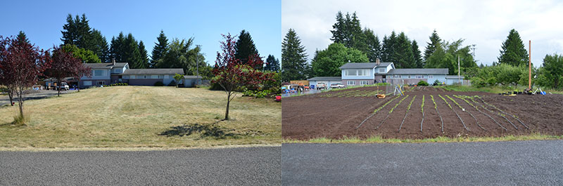 Front Lawn, Before And After