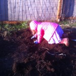 Teeka Harvesting Potatoes